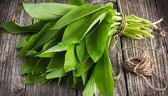ŠÁDA: Nejlepší bylinka brzy z jara? Medvědí česnek nemá konkurenci