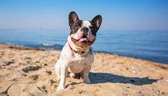 Barcelona chystá na letošní léto novinku. Psi budou mít vlastní pláž
