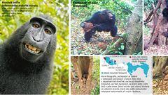 Věří opice v boha? Šimpanzi mají náboženství a svatyně, spekulují vědci