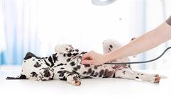 Anestezie u domácích mazlíčků. Je potřeba se bát?