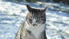 Zlín již 18 let přispívá na kastraci koček, nekastrovaných je však stále hodně