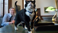 Vrchní myšilov britské diplomacie. Kocour Palmerston ovládl Twitter i média