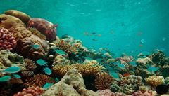 Korálové útesy u Skotska by mohli 'opravovat' roboti