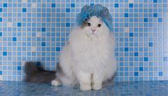 Potřebujete umýt kočku? Nejlepší jsou suché šampony, radí veterinářka