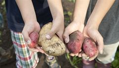Žáci vypěstují, kuchařky v jídelně uvaří: dřive neoblíbené práce se do škol vrací