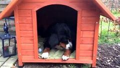 Když pes zkouší novou boudu