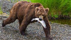 Na severu Řecka je útulek pro traumatizované vlky a medvědy