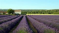 Nádherná Provence. Na cestě za levandulovými poli