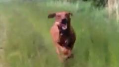Když se pes bojí, že mu utečete