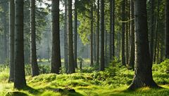 Japonští vědci a kouzlo aromaterapie. Vůně lesa harmonizuje mysl, snižuje stres a pomáhá relaxovat