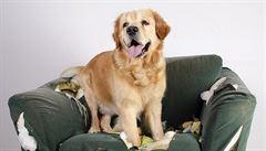 Rozkousané boty a zničený nábytek? Váš pes či kočka mohou být ve stresu