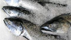 Podle čeho vybírat čerstvé či mražené ryby? Přinášíme pár tipů