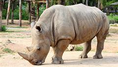Biotechnologie pro nosorožce. Vědci chtějí zachránit ohrožený druh