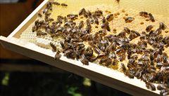 Návrat ke včelaření? Slováci chovají nejvíce včelstev za 20 let