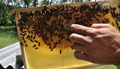 Včely z Ruzyně vyrábějí oceňovaný med a hlídají ovzduší u letiště