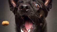 Fotograf se snaží zachytit výrazy hladových psů. Podívejte se
