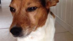 Když pes vrtí ocasem a neví proč