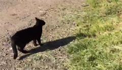 Na procházce se psy. Když se venčí i kočky