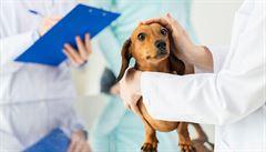 Včasné odhalení nemoci. Hodnota preventivního vyšetření zvířete