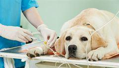 Antibiotika při léčbě zvířecích mazlíčků. Na co dát pozor, radí veterinář