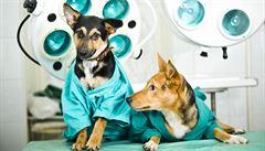 Operace kočky nebo psa. Kdy dát zvířeti naposledy jídlo a vodu?