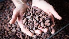 Čokoláda s vysokým obsahem kakaa podle vědců pomáhá snížit tlak