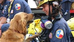 Bretagne na poslední cestu doprovodilo salutování. Odešel poslední záchranářský pes z 11. září