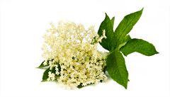 Obalené v těstíčku s česnekovým dipem. Usmažte si bezové květy