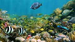Za 30 let bude v oceánech více tun plastů než ryb