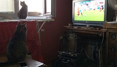 Kočka, která se dívá na fotbal