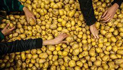 Loňské extrémní počasí likviduje i letošní úrodu. Trpí jablka i brambory