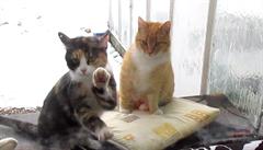 Když chce kočka domů stůj co stůj