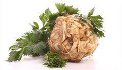 Bylinková abeceda. Celer miřík jako afrodiziakum a účinný pomocník při čištění krve