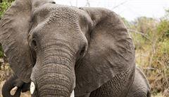 V Africe budou hledat nášlapné miny i sloni