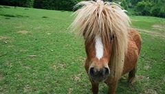 Polský poník darovaný k prvnímu přijímání málem skončil na maso