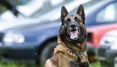 Unikátní čich dělá ze psích záchranářů nepostradatelné pomocníky