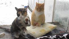 Roztomilá kočka se dobývá do domu skrze zavřené okno