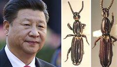 Vědec pojmenoval brouka po čínském prezidentovi. Tamní cenzoři mají napilno