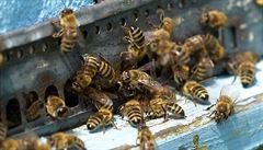 Newyorčany znepokojuje invaze včelích rojů