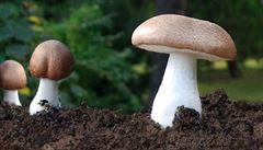 Deštivé počasí má jednu výhodu. Na Šumavě rostou desítky druhů hub
