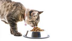 SOUTĚŽ: Vyhrajte granule Royal Canin pro svou kočku