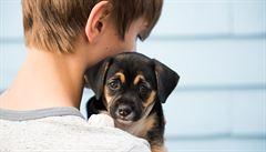 Šišlejte jen na štěňata. Jak psi rozumějí lidské řeči?