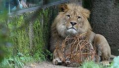 Olomoucká zoo za krmivo pro zvířata utratila takřka šest milionů