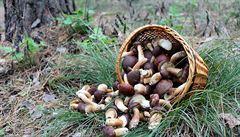 Pondělní LN: Lesní plody za 7,7 miliardy korun