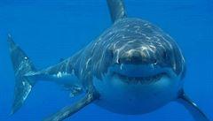 V Austrálii napadl žralok člověka a usmrtil ho. Jde letos již o osmou oběť