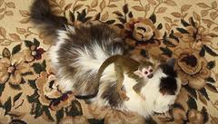 Dojemný příběh. Kočka adoptovala opičí mládě