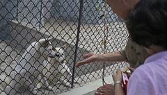 Pudlové od Kim Čong-una a prastarý kavalír. Zoo v KLDR láká pavilonem psů