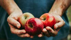 Jak je možné, že jsou jablka na trhu celý rok? Může za to chemický trik