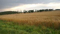 Polský rolník šel zkontrolovat, jak mu roste obilí a našel poklad