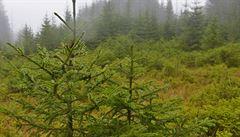 Lesy ČR smí podepisovat další smlouvy v obřím tendru. ÚOHS zastavil řízení